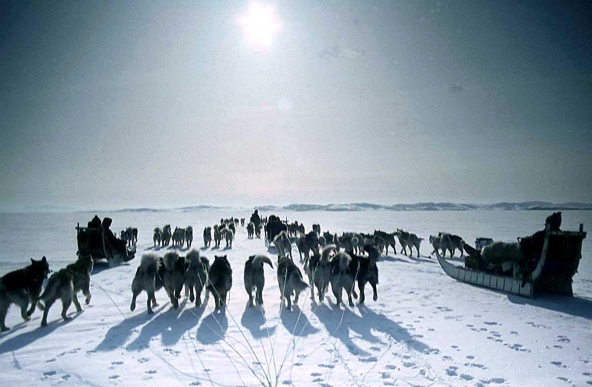 eskimos innuit free pictures