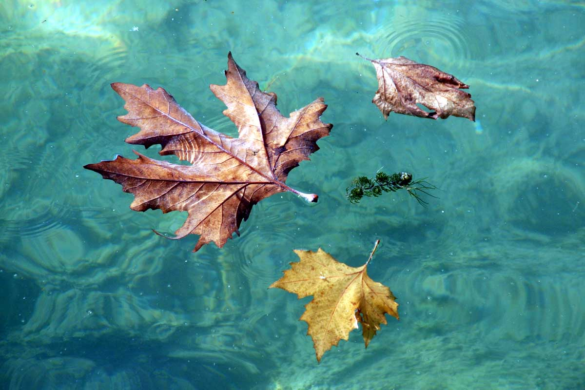 http://www.bigfoto.com/miscellaneous/photos-07/leaves-water-j7r.jpg