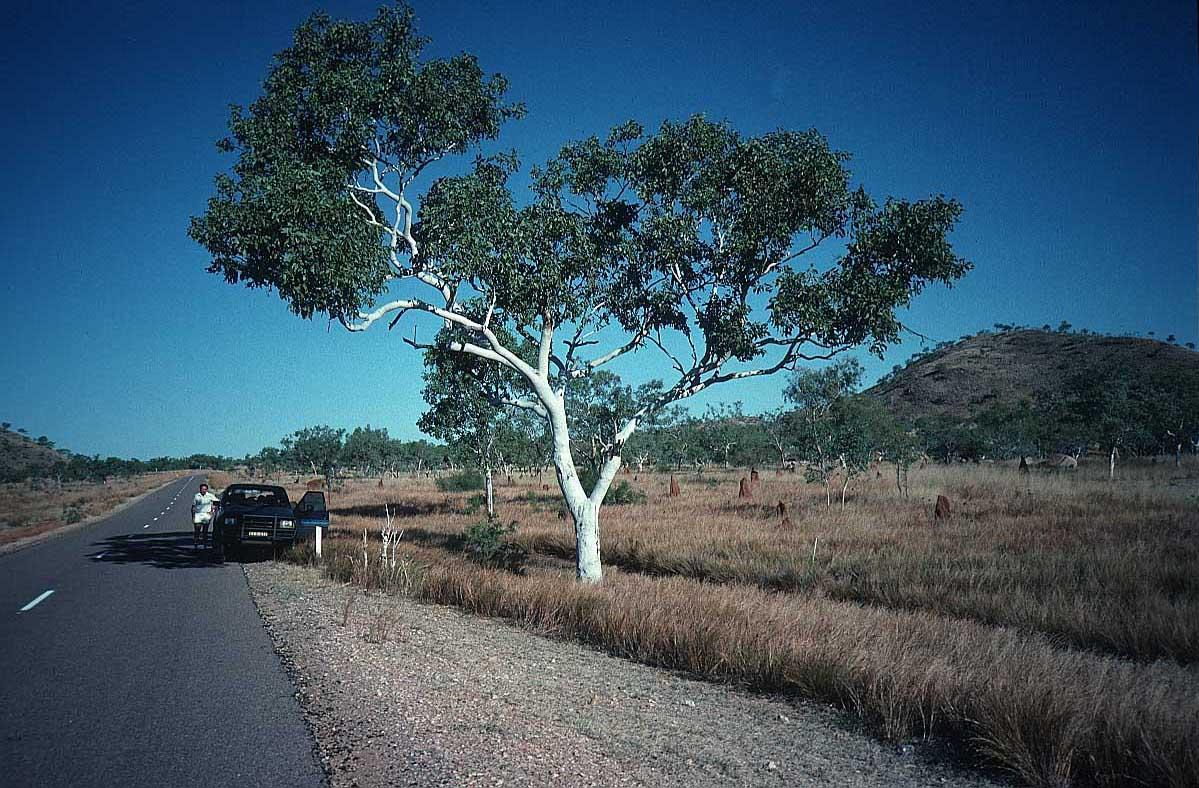 australia sydney melbourne perth outback pictures. Black Bedroom Furniture Sets. Home Design Ideas