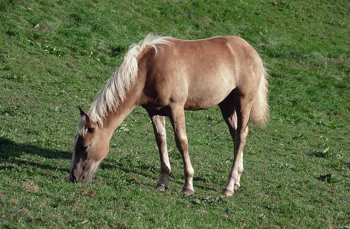 الملك والمرأة عجيبه horse_picture_pferd.jpg