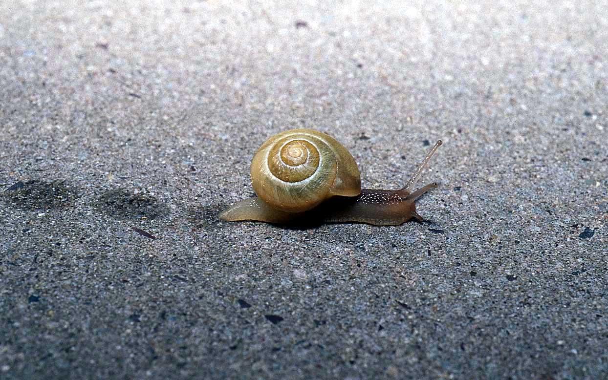 buona notte, vi piacciono le lumachine? (ma questa così carina non la mangiate però!) dans immagini buon...notte, giorno snail_animals_photos