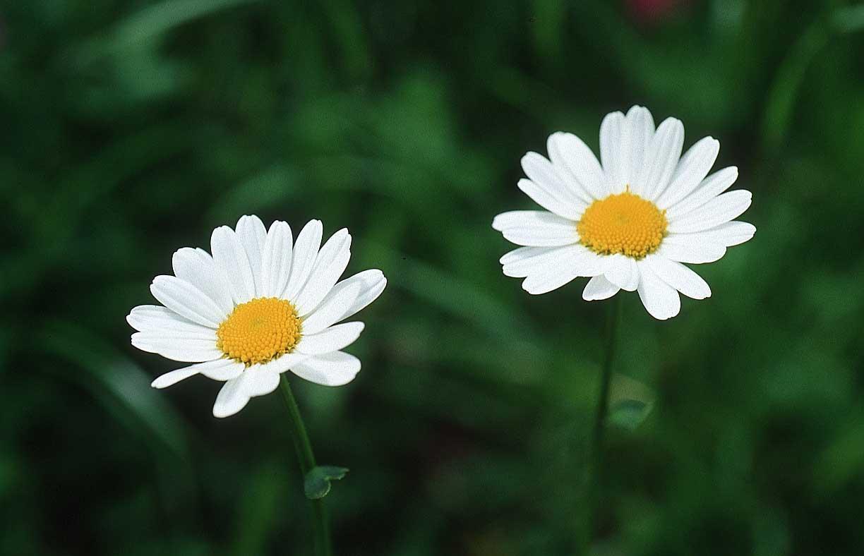 flower k09