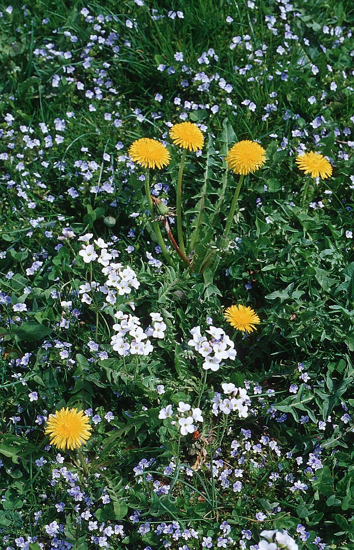 صور أحلي ورد و زهور بالعالم ,, زهور تجنن
