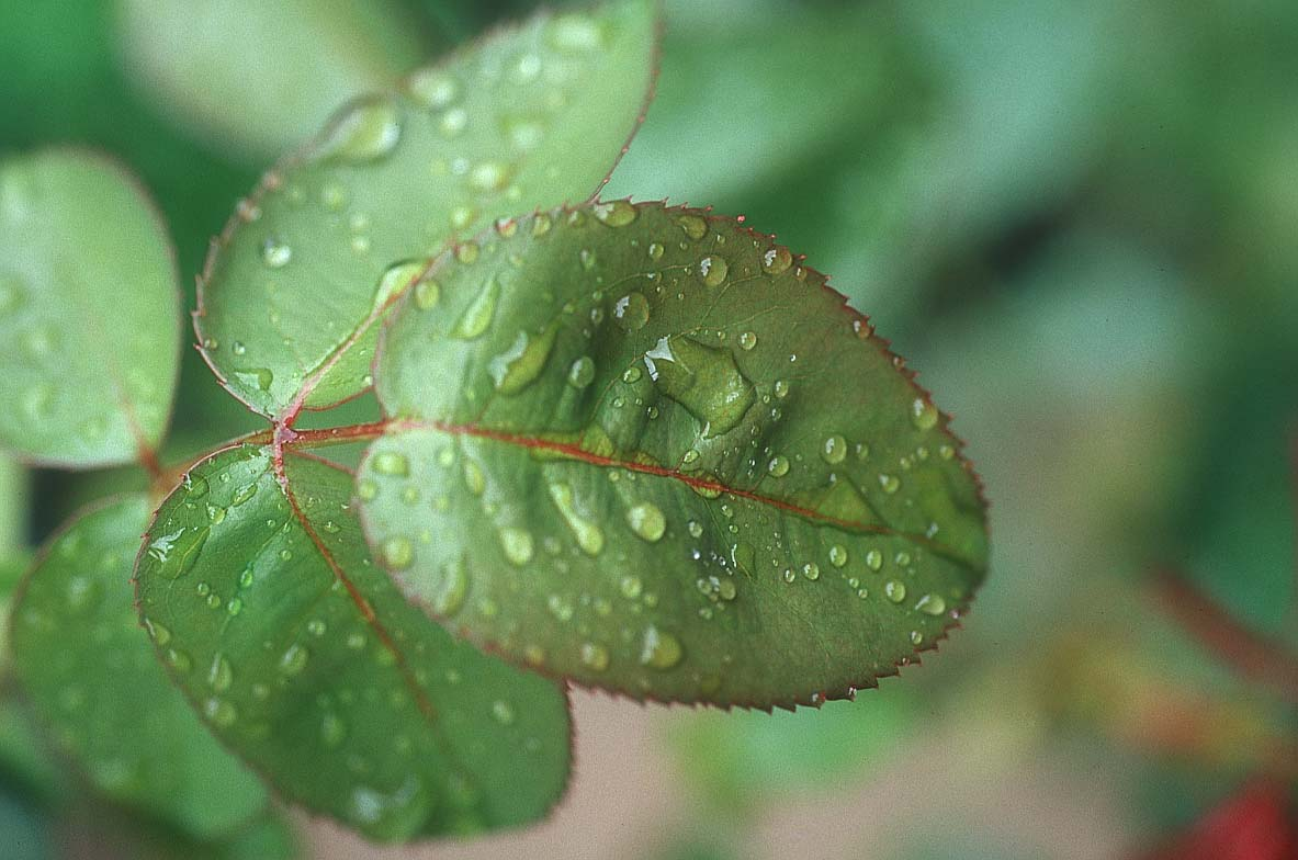 http://www.bigfoto.com/sites/galery/photos4/leaf_rain.jpg