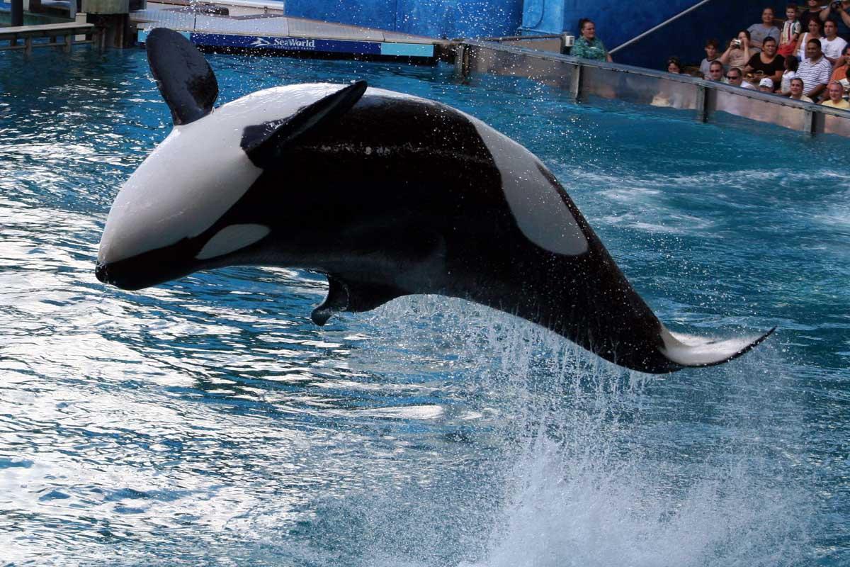 buona notte dans immagini buon...notte, giorno killer-whale-i3r