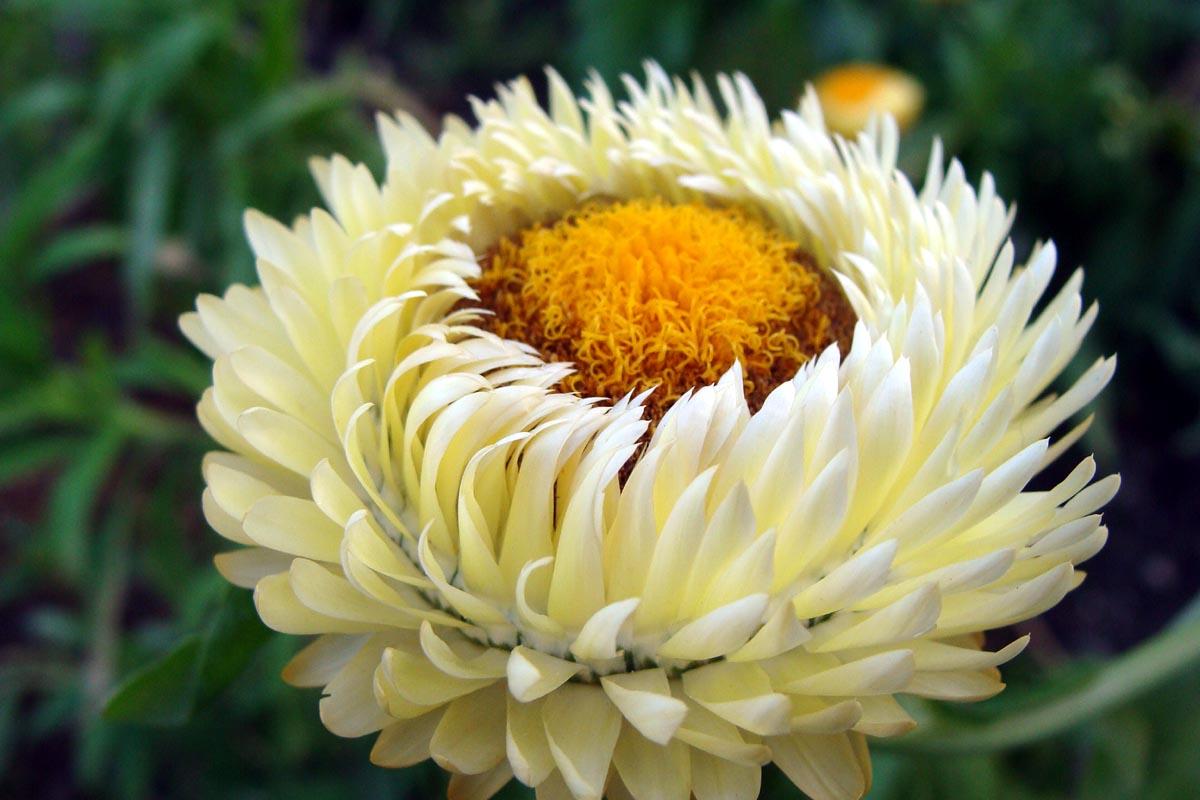 buona notte dans immagini buon...notte, giorno flower-7am3