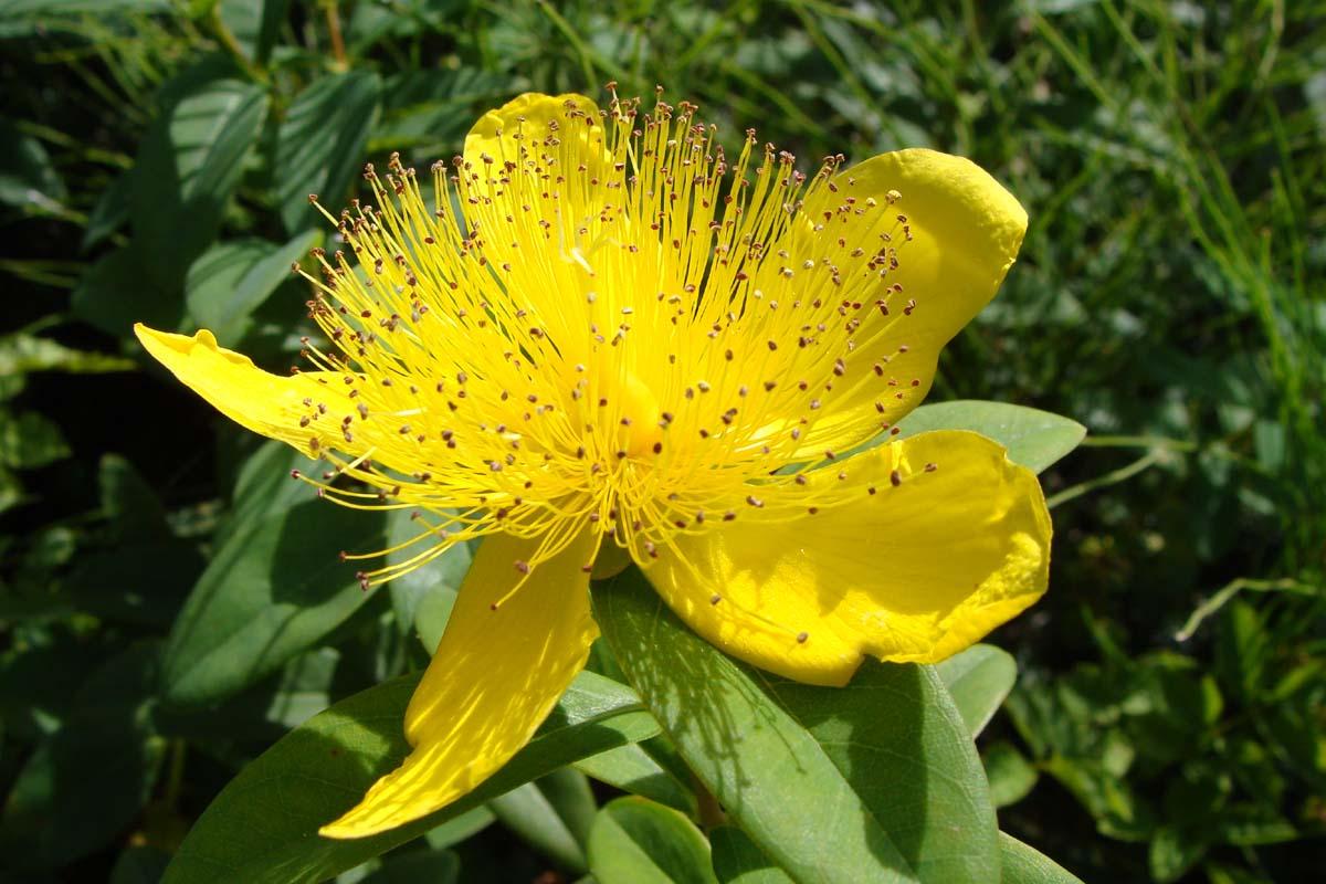 عکس گلهای بهاری بسیار زیبا در طبیعت