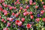 flowers-ha3s.jpg (225485 Byte)