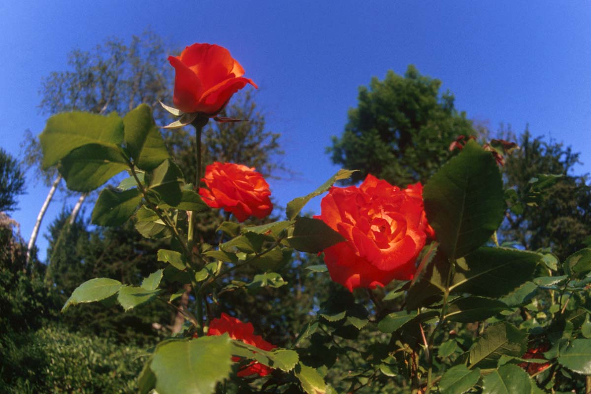 البنفسج زهور الفل زهور النرجس