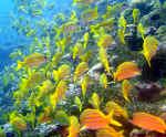 54-underwater.jpg (227384 Byte) underwater scuba diving shoal of fish