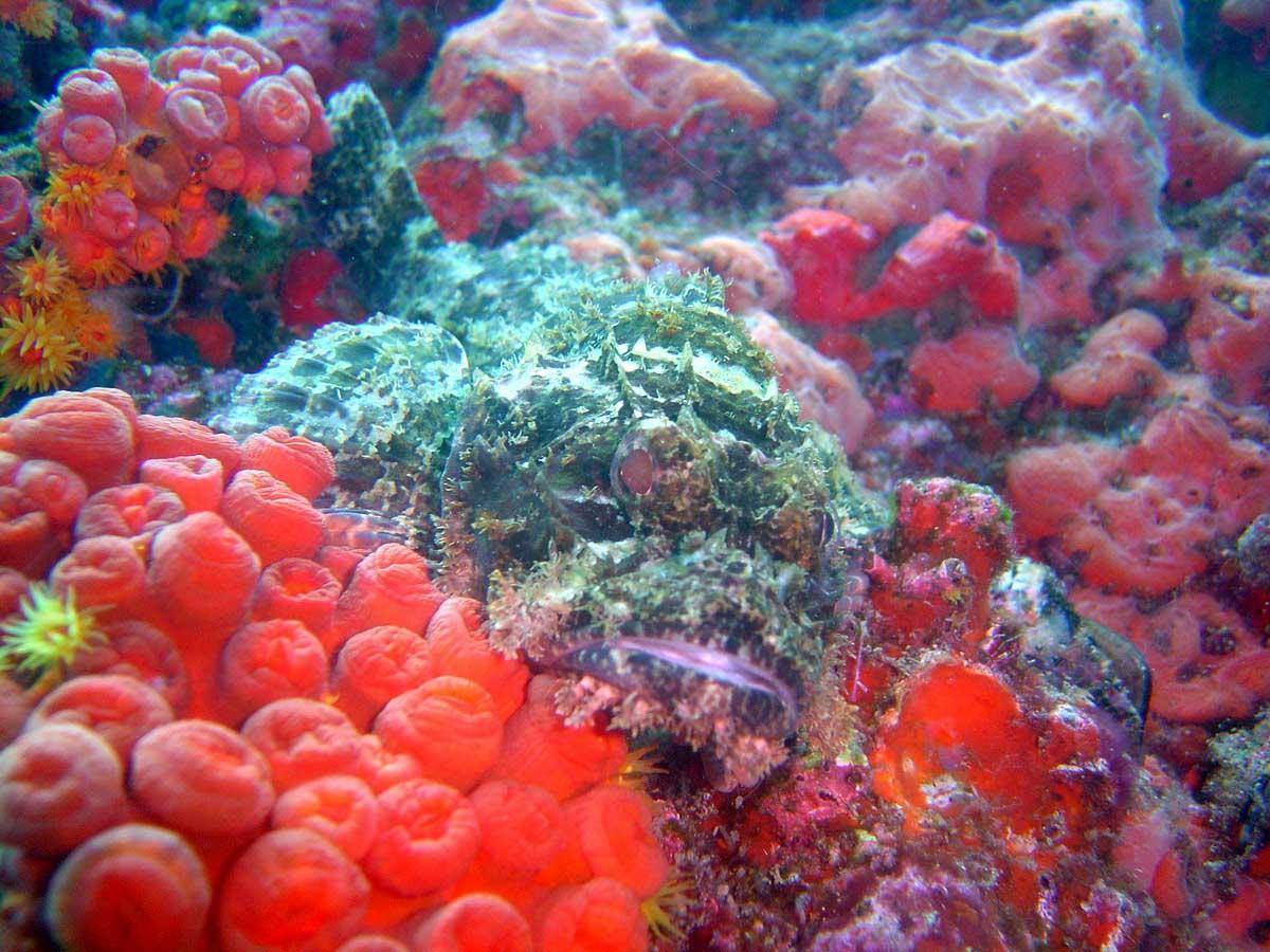 buona notte dans immagini buon...notte, giorno fish-corals-jc3