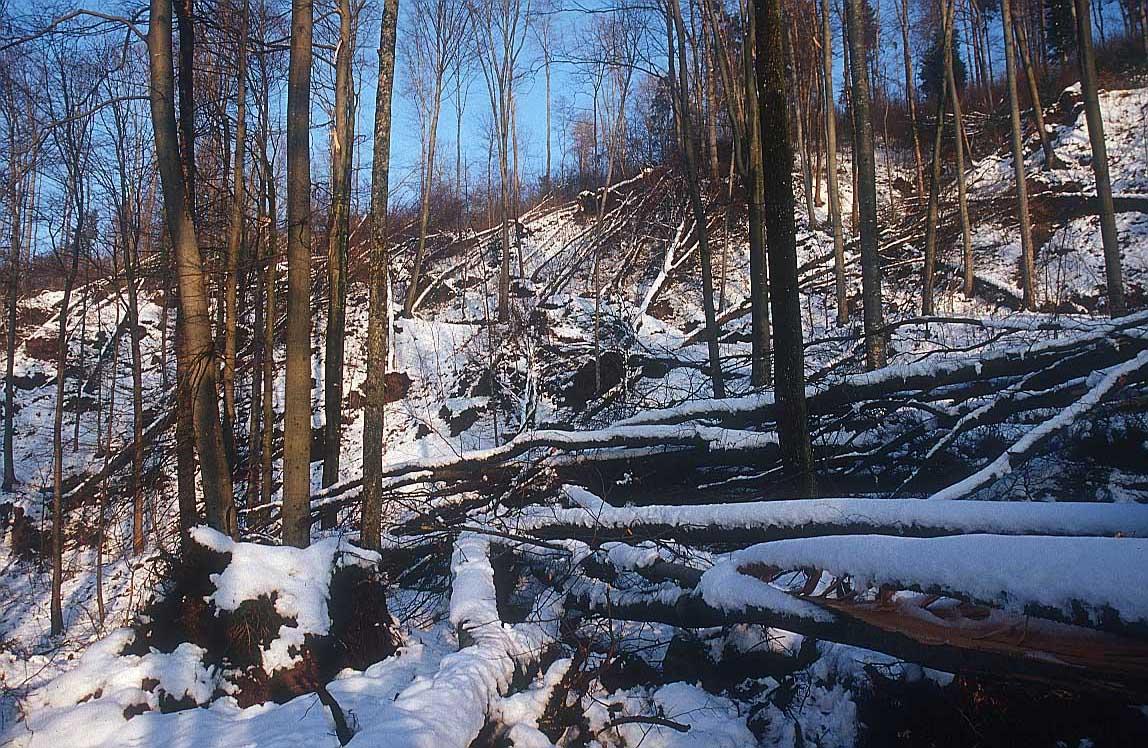 Invierno: Imagenes Alta calidad