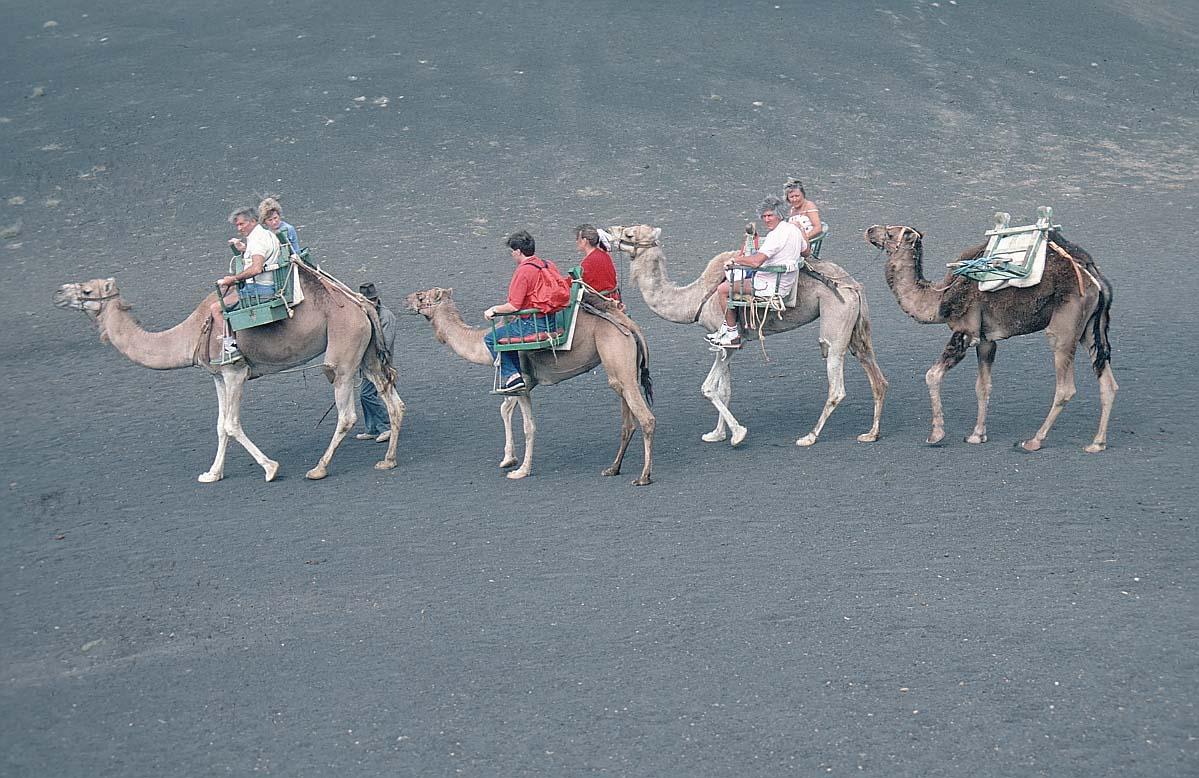 01b kamele