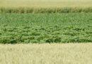 agriculture u4x