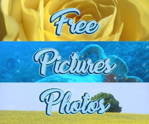 printable flower pictures