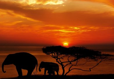 5 Best African Safari dream destinations