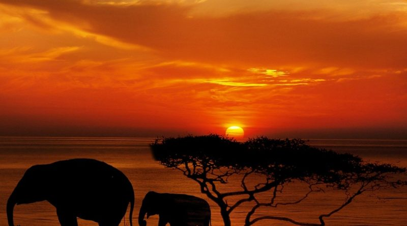 5 Best African Safari dream destinations